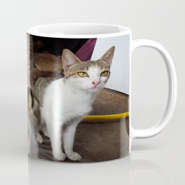 Back Yard Kitties  Coffee Mug