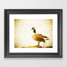 Canadian Goose Framed Art Print
