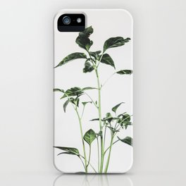 Chili iPhone Case
