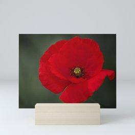 Red poppy Mini Art Print
