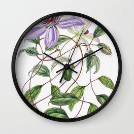Violet clematis flower from Edwardss Botanical Register (1829-1847) by Sydenham Edwards John Lindley Wall Clock