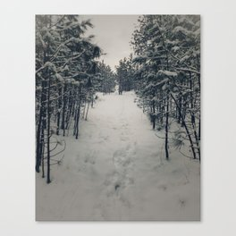 A path in the snowy woods Canvas Print