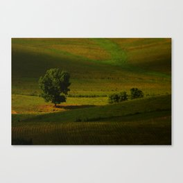 lines and shadows Canvas Print
