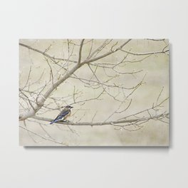 Eastern Bluebird Metal Print