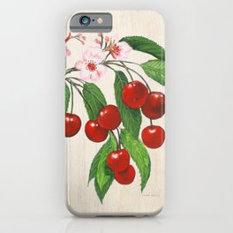 Cherries and their Blossoms iPhone Case