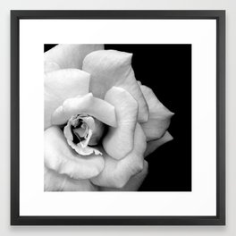 Rose Monochrome Framed Art Print