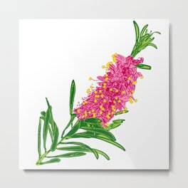 Beautiful Pink Australian Native Floral Illustration Metal Print