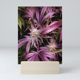 Magenta Mini Art Print