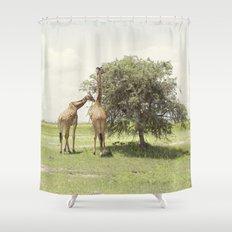 giraffes::rwanda Shower Curtain