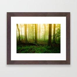 Misty Green Forest Photography Framed Art Print