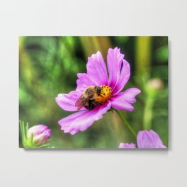 Bumble Bee on Pink Cosmos Metal Print