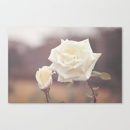 White Rose and Baby Canvas Print
