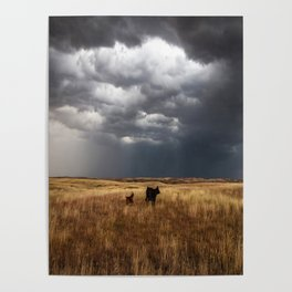 Life on the Plains - Cow Watches Over Playful Calf in Oklahoma Poster