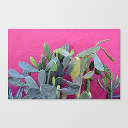 cactus i. colombia. Canvas Print