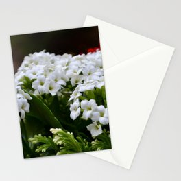 Little White Longwood Flowers Stationery Cards