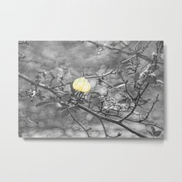 Hanging Faerie Lantern Metal Print