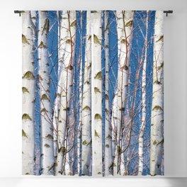 Birches 26 Blackout Curtain