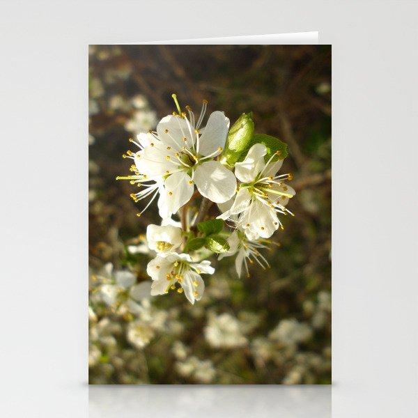 Spring Blossom  Stationery Cards