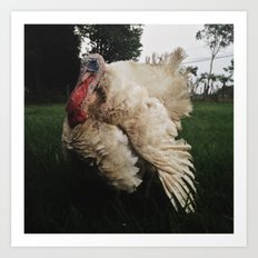 Turkey Art Print