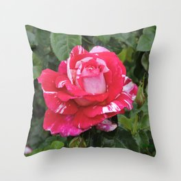 "A Rose Named ""Neil Diamond"" Throw Pillow"