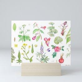 Norwegian blacklisters - Botanical beauty Mini Art Print