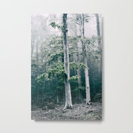 Trees in the forest with fog and wind Metal Print