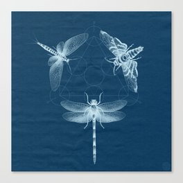 X-RAY Insect Magic Canvas Print