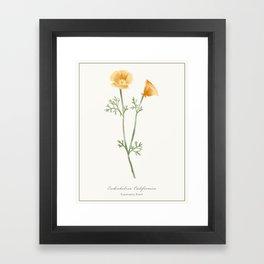 California Poppy Watercolour Botanical Framed Art Print