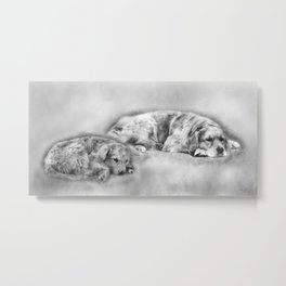 Golden Retriever young and old Metal Print