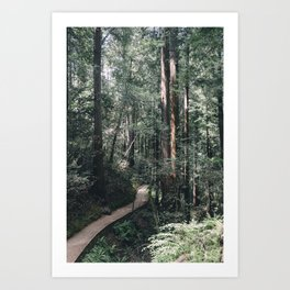 Muir Woods Pathway, California Art Print