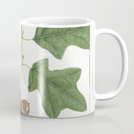 Bears Oak or Quercus Banisteri pl 21 (1819) from The North American Sylva by Franois Andre Michaux Coffee Mug