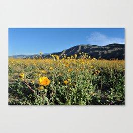 SoCal Super Bloom Canvas Print