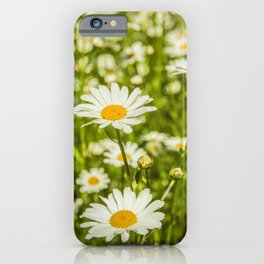 Daisies in the garden iPhone Case