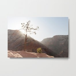 Morning Light on Angel's Landing Tree (Zion National Park, Utah) Metal Print