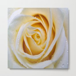 White_Rose-9 Macro Metal Print
