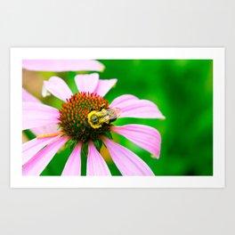 Echinacea Flower + Bee Art Print
