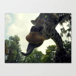 Giraffes are Silly. Canvas Print