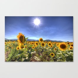 Sunflower Summer Days Canvas Print