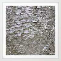 Abstracts in Nature Series -- Silver Birch Bark Art Print