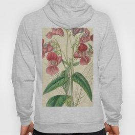 Edwards' botanical register Hoody
