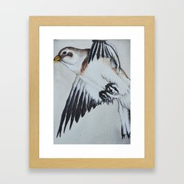 Snow bunting in Flight Framed Art Print