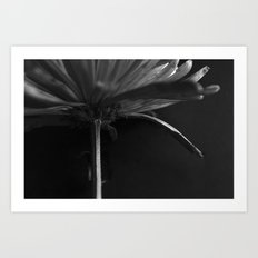 Secret Light no.4 Art Print
