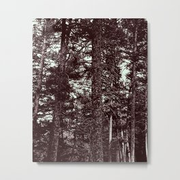 Forest of Contrast Metal Print