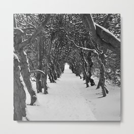 Winter Path Metal Print
