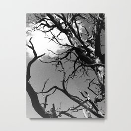 Rooted in the Sky Metal Print
