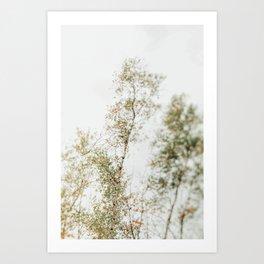 Overhead Canopy 2 - Modern Abstract Tree Photo Art Print