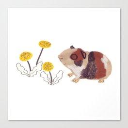 Guinea Pigs Canvas Print