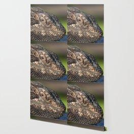 Bearded Dragon watching you Wallpaper