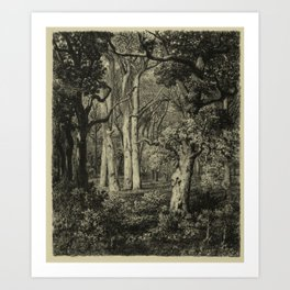 Old Oaks Art Print