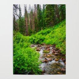 Wasatch Mountains Forest Creek Print Poster